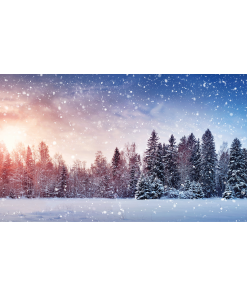 Winter scene with a Christmas forest.
